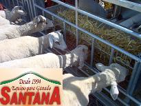Plastic Slatted Floor Goat Housing Vijay Farms Plastic